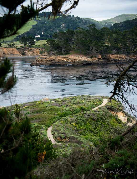 Scenes and details from Point Lobos State Natural Reserve in California; spring wildflowers, crashing waves, rocky cliffs and unique forest along the beautiful California coast.