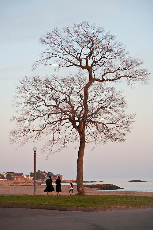 Bare tree against blue sky by the ocean at dusk with nuns strolling by