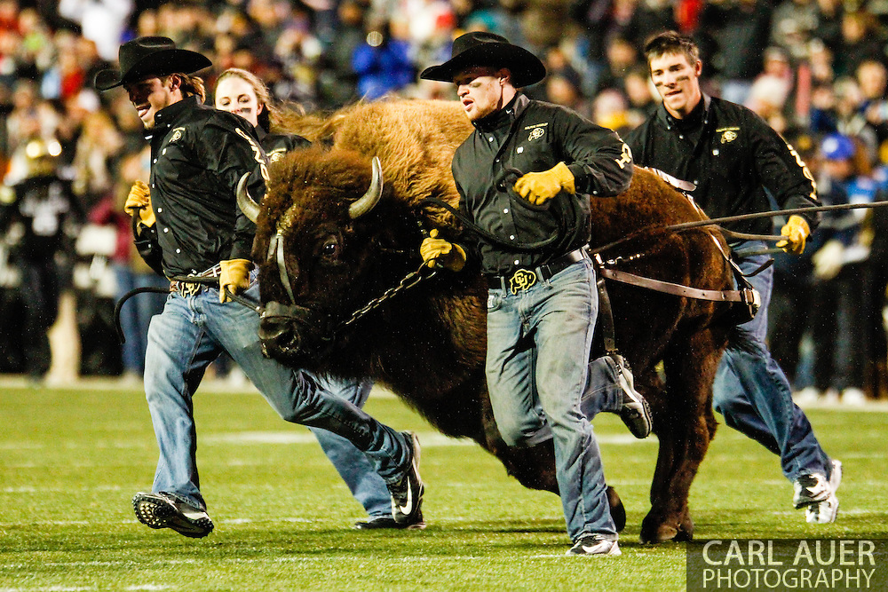 November 23rd, 2013:  Ralphie the Buffalo takes the field prior to the start of action in the NCAA Football game between the University of Southern California Trojans and the University of Colorado Buffaloes at Folsom Field in Boulder, Colorado