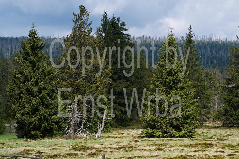 Sonnenberger Moor, Hochmoor, Sonnenberg, Harz, Niedersachsen, Deutschland | Sonnenberg Moor, Harz, Lower Saxony, Lower Saxony, Germany
