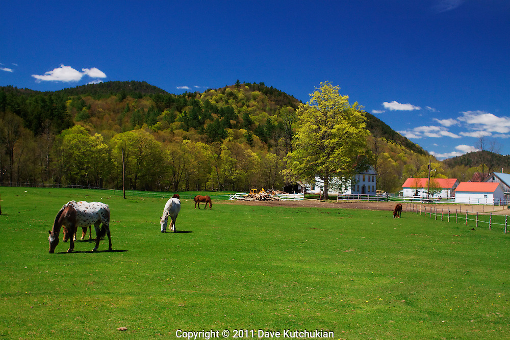 Newfane, Vt horses grazing on new spring green grass