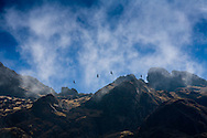 Andean Condors (Vultur gryphus) soar above the rugged peaks of Bolivia's Cordillera Real of the Andes.