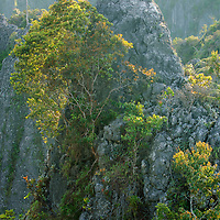 The spectacular karst complex of the Sangkulirang Peninsula is the most extensive limestone area in Borneo.  This region is poorly explored but is believed to harbour a rich diversity of endemic plants. East Kalimantan, Indonesia.