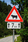 Beware of cows. Photographed in Austria, Tyrol