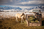 A white horse on a farm near Mount Timpanogos in Heber, Utah