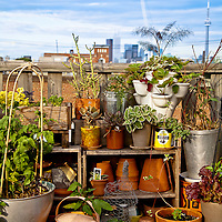 An urban rooftop container garden with mixed herbs and vegetables.