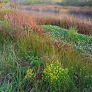 Lagunitas Creek, Tomales Bay Ecological Reserve, California