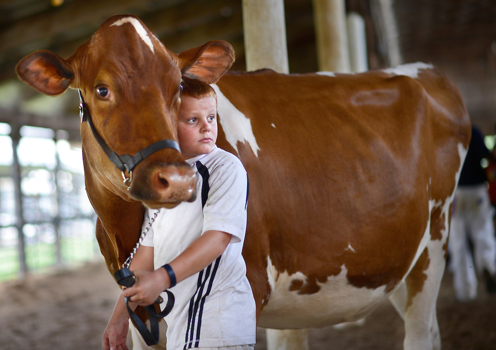 All eyes and ears turn to the judge as Eli Moore, 9, steadies a red and white Holstein during the dairy judging at the Heart of Illinois Fair Tuesday. Moore, of Bartonville, and his brother, Brandon, 12, were showing for their friend, Dylan Bontz, who broke his ankle recently and was unable to attend the competition. Neither of the brothers had ever been in a show competition before.