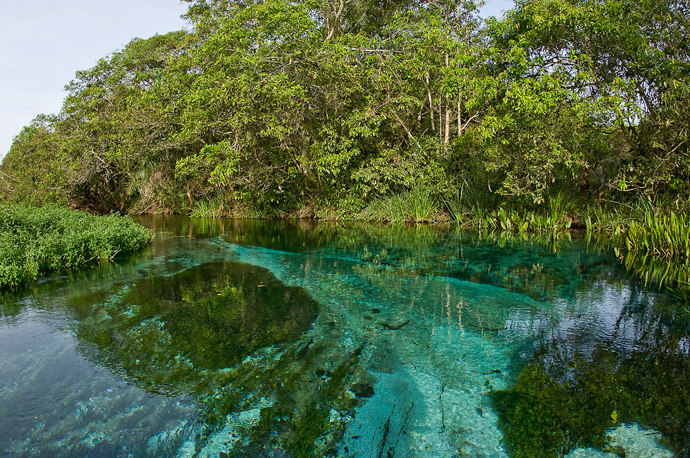 Crystal clear river in a region of Mato Grosso do Sul that contains a lot of calcium and limestone in the ground. The rock filters the water, turning it transparent.