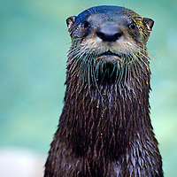 Whales, Orcas, Sea Lions, Seals and Sea Otters