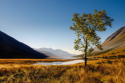 A lone tree at the head of Loch Etive in autumn at the end of Glen Etive, Highlands of Scotland<br /> <br /> (c) Andrew Wilson | Edinburgh Elite media