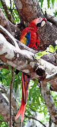 Costa Rica:  Colorful parrots spark up the country's middle lands.