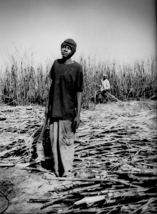 Wassan, sugar cane cutter, in fields near Barahona, Dominican Republic..