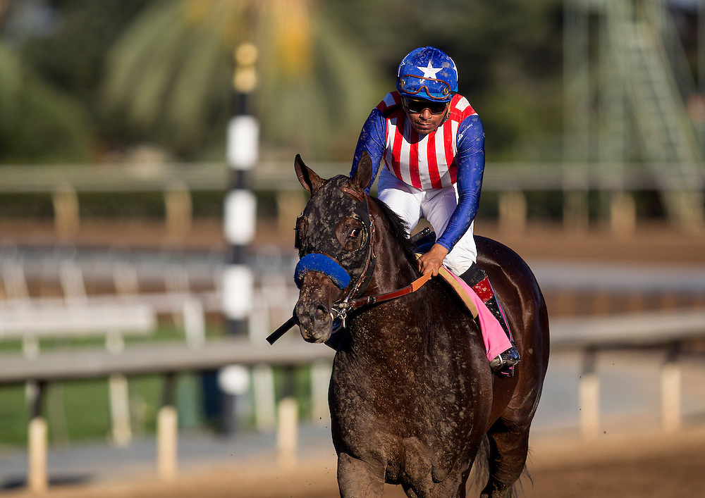 September 26 2015: Bayern with Martin Garcia up at the Awesome Again Stakes at Santa Anita Park, Arcadia CA. Alex Evers/ESW/CSM