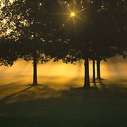 """Foggy Burst of Morning""<br />