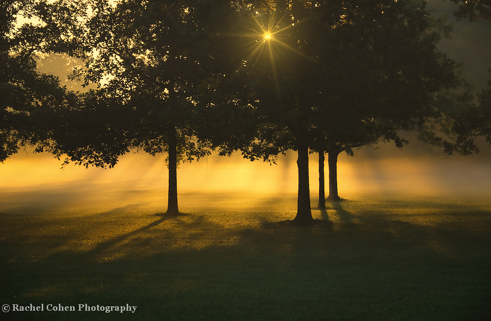 &quot;Foggy Burst of Morning&quot;<br />