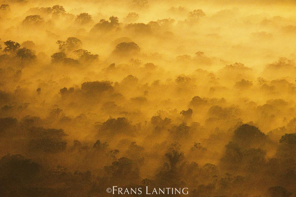Morning clouds over lowland rainforest (aerial), Manu National Park, Peru