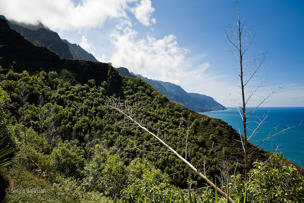 The rugged fluted ridges and  lush landscape of the Kalalau Trail on the Na Pali coast of the north shore of Kauai, Hawaii.
