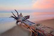 I wonder how long this log drifted before it came to rest on Kitty Hawk beach.
