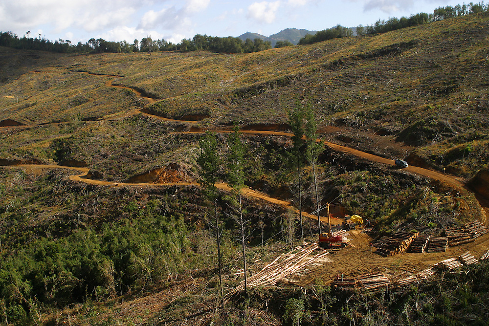 Aerial view of a logging operation in the sector of Cordillera Costa-Lebu, Chile, Feb. 16, 2004. Daniel Beltra/Greenpeace.