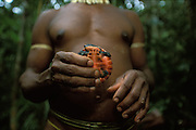A Kombai man with an edible river tortoise that he has caught in the rainforest in Papua, Indonesia. September 2000. The Kombai are a so-called treehouse people who build their homes high up in the trees.