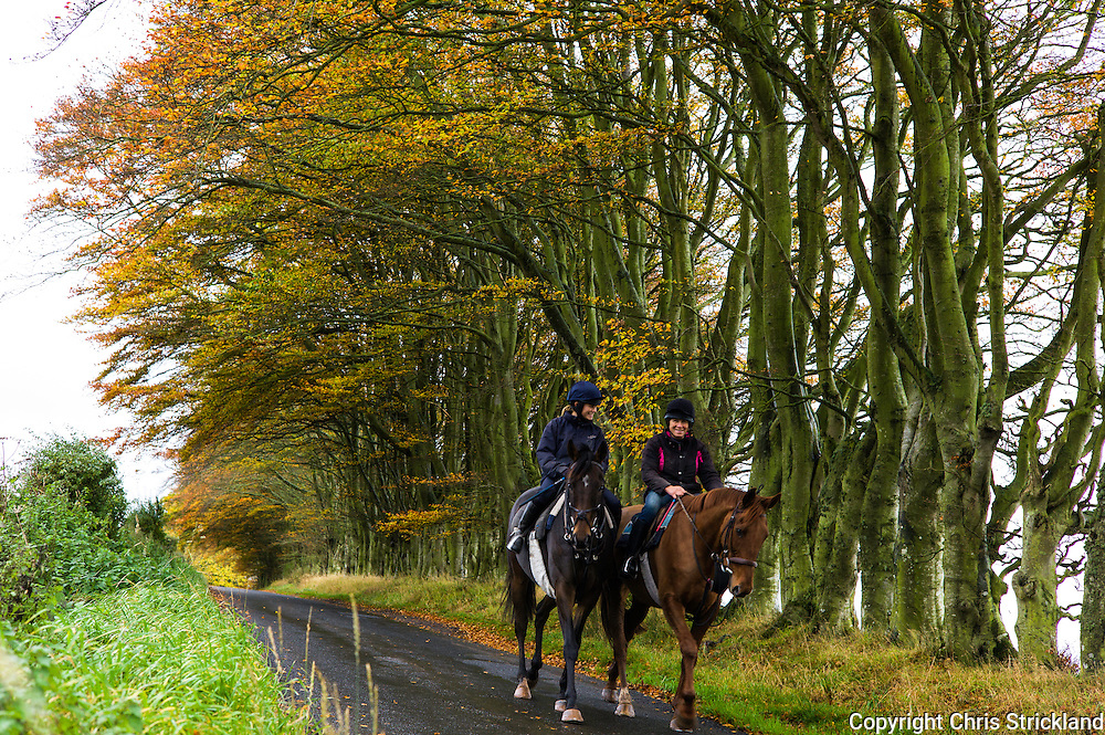 Bonchester Bridge, Hawick, Scottish Borders, UK. 31st October 2015. Point to point racehorces Durban Gold and Oscar Stanley on excercise with jockey and trainer Joanna Walton and Di Walton.
