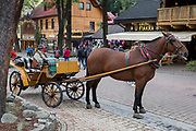 A Polish horse and carriage driver waits for customers wishing to ride up Krupowki Street, 17th September 2019, in Zakopane, Malopolska, Poland.