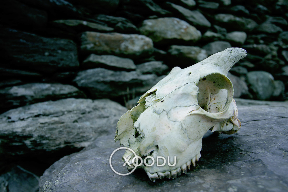 Sheep skull on rock, (none), Ireland (September 2007)