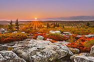 A pastel sky hangs over the setting sun highlighting the red autumnal leaves worn by the huckleberry bushes at Dolly Sods Wilderness in West Virginia.