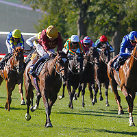 Newmarket 12th August