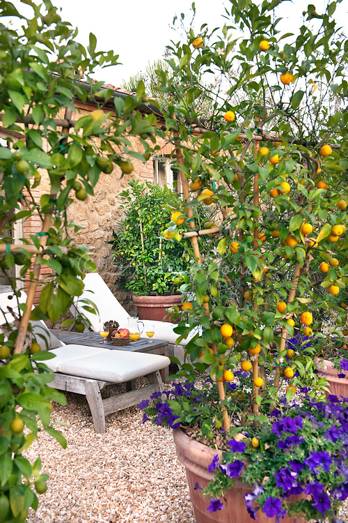 Courtyard garden with sun loungers, gravel and orange (Citrus) trees with pansies in containers at Borgo Santo Pietro, Tuscany, Italy<br /> <br /> photography &copy; Andrea Jones/courtesy Borgo Santo Pietro
