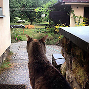 Speedy cat observing her living room which is underwater at the moment. #prag #praha #prague #czechrepublic #garden #speedy #cat #outside #katze #animal #smart #waiting #rain