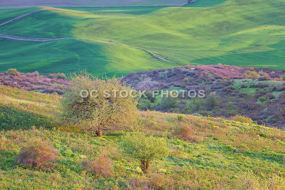 Rolling Grasslands of Palouse Washington