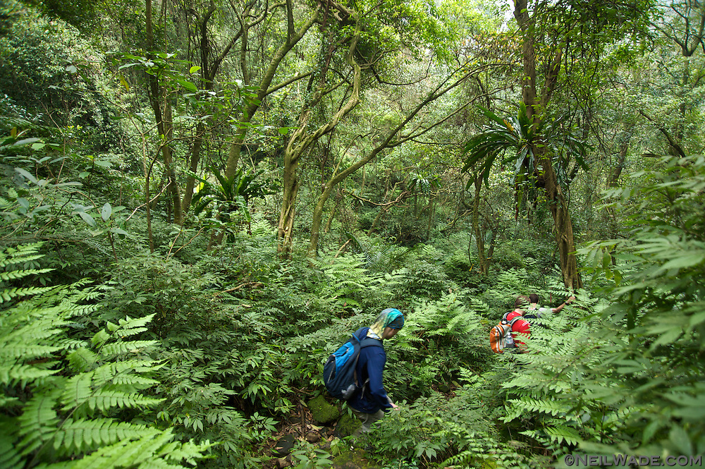 Walking down from the peak we returned to the lush forest of norhtern Taiwan.