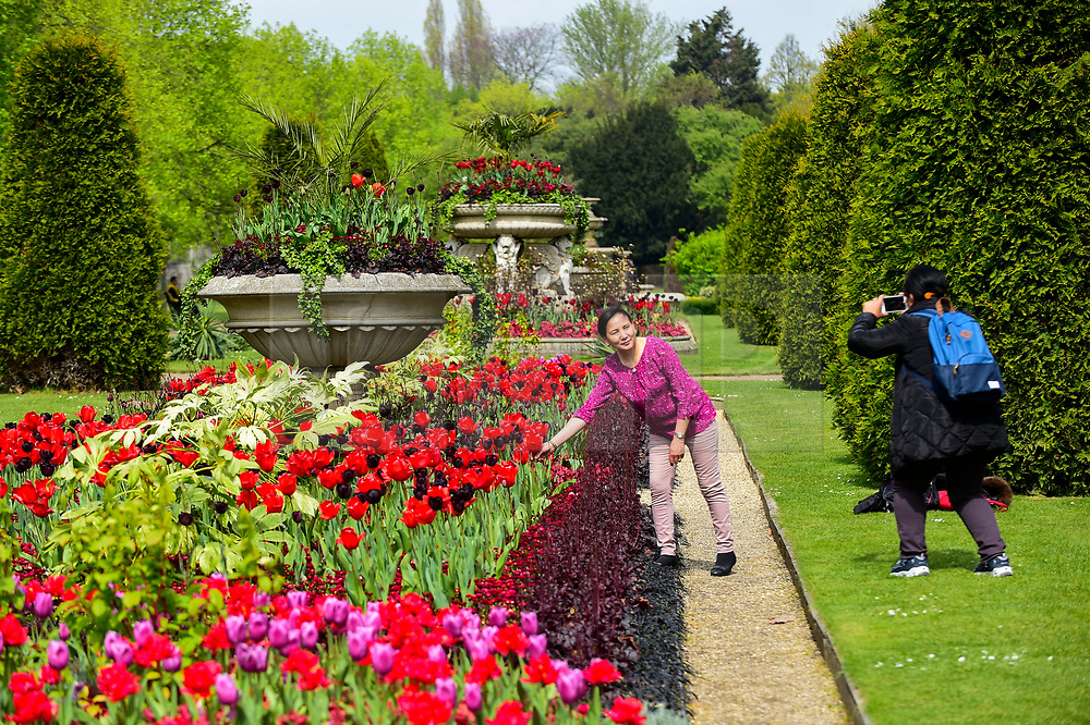 © Licensed to London News Pictures. 18/04/2019. LONDON, UK.  Women enjoy the spring blooms in Regent's Park.  The forecast is for increasingly warmer weather for the Easter weekend.  Photo credit: Stephen Chung/LNP