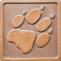 Engraving of lion footprint
