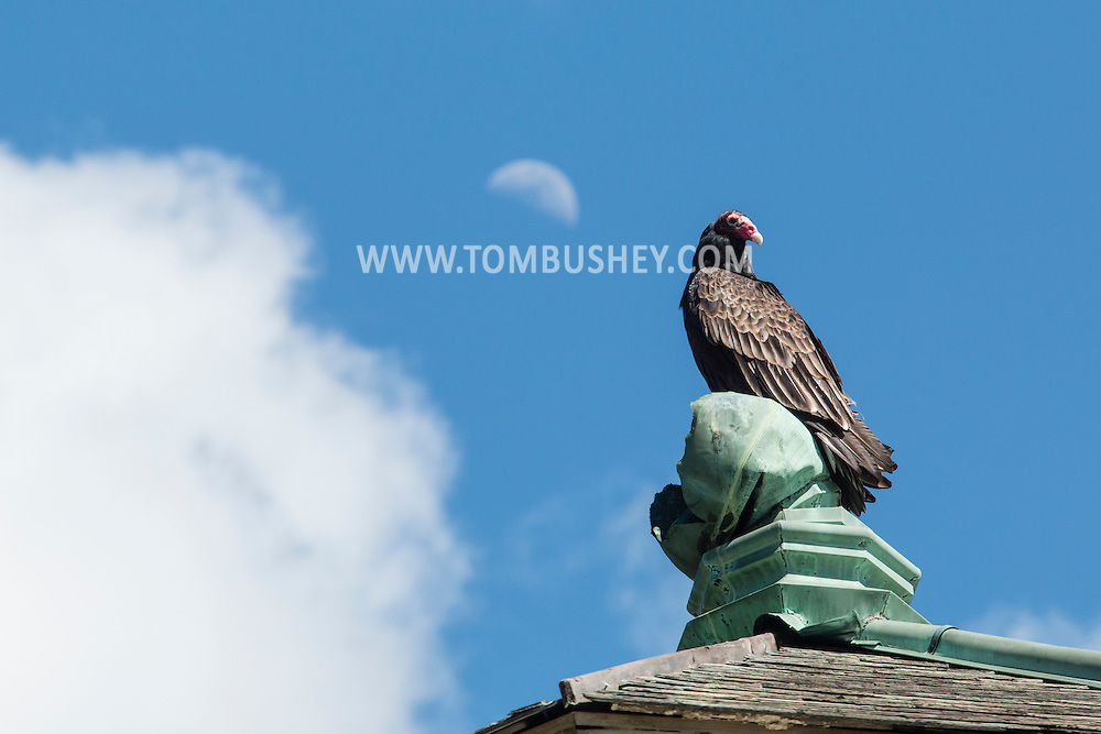 Monroe, New York - A turkey vulture perches on top of an  abandoned building at Gonzaga Park with the moon in the back ground on April 25, 2015.