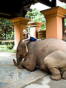 Guest dismounts her elephant at the entrance of Anantara Golden Triangle resort.