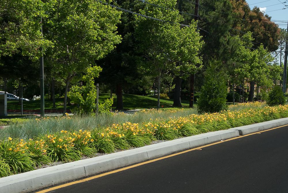 Landscape design along a median strip