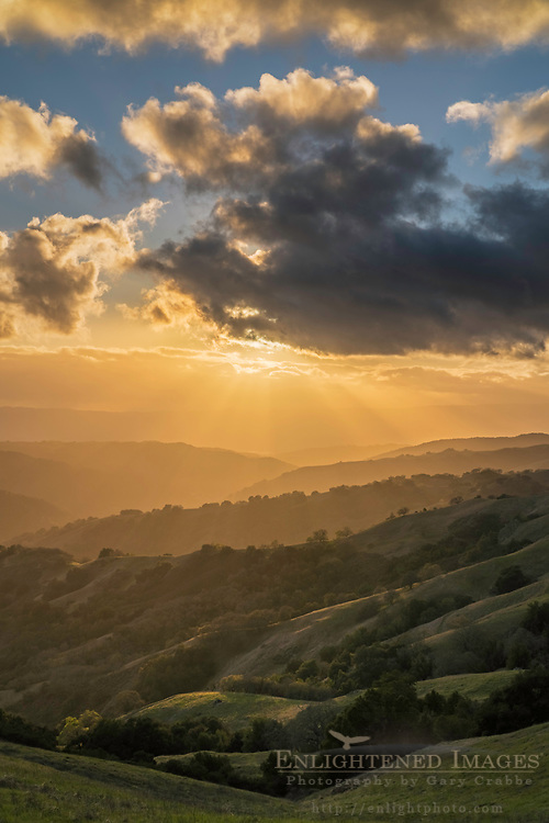 Crepuscular rays (Sunbeams) at sunset over rolling green hills in spring at Henry Coe State Park, Santa Clara County, California