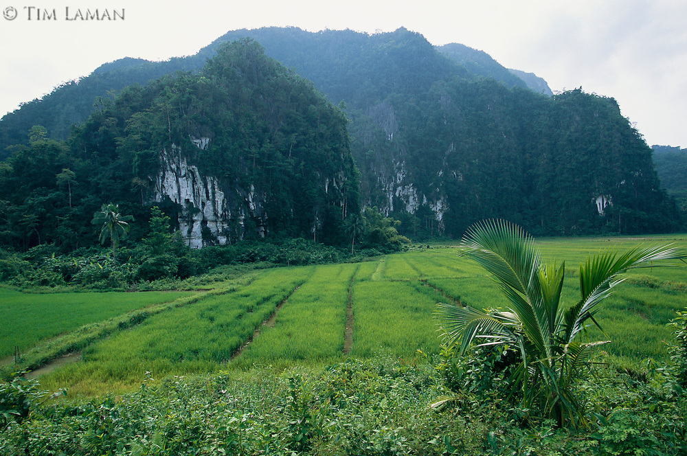 A rice field at the foot of a limestone mountain.