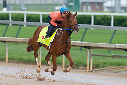Derby 142 hopeful Gun Runner with Carlos Rosas up were on the track for training, Sunday, May 01, 2016 at Churchill Downs in Louisville.