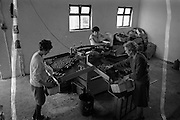 18/09/1963<br /> 09/18/1963<br /> 18 September 1963<br /> Nurseries at Rush, Co. Dublin. Tomato grader machine in action.