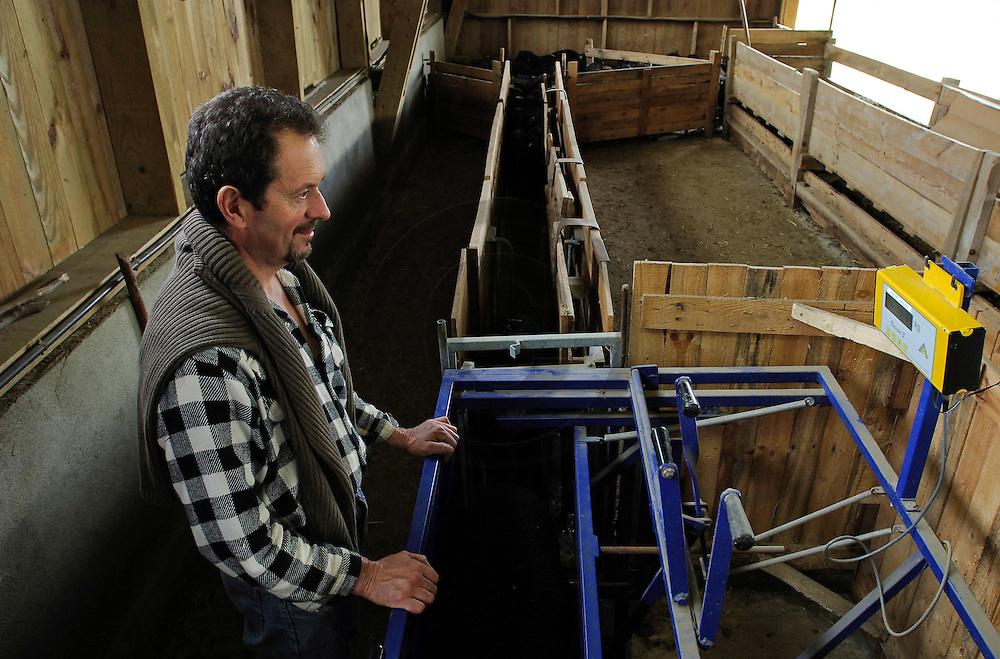 30/03/06 - CHANIAT - HAUTE LOIRE - FRANCE - Elevage de Noirs du VELAY de Gerard JARLIER. Pesee des agneaux - Photo Jerome CHABANNE