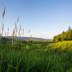 Grass in a field on the edge of the Green Mountains in Duxbury, Vermont.