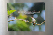 Photo magnet with beautiful hummingbird, F. Scott Fitzgerald quote, nature, garden, California, home art, fridge art, Los Angles, Southern CA, Santa Monica.
