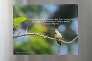 Photo magnet with beautiful hummingbird, F. Scott Fitzgerald quote, nature, garden, California, home art, fridge art, Los Angles, Southern CA, Santa Monica.