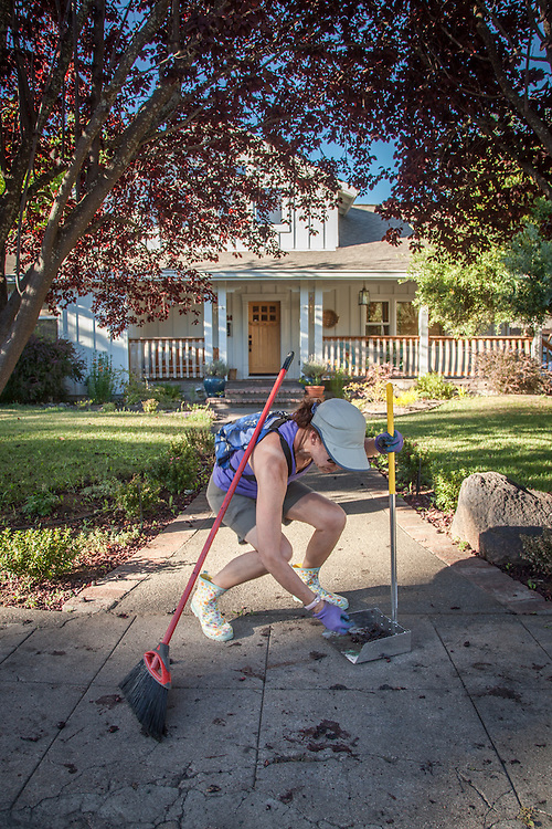 "Ruth Matera sweeps up plums that have fallen from the trees to the sidewalk in the front of her home in Calistoga  ""I wish I had more time to make pies or jam from all these plums...what a mess."""