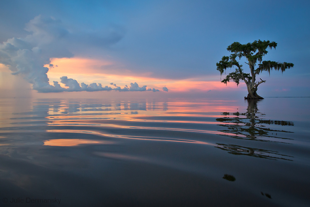 Lake Maurepas at sunrise.