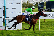 Seafarer ridden by Martin Dwyer and trained by Marcus Tregoning in the Andersons Waste Handicap race.  - Mandatory by-line: Ryan Hiscott/JMP - 01/05/2019 - HORSE RACING - Bath Racecourse - Bath, England - Wednesday 1 May 2019 Race Meeting